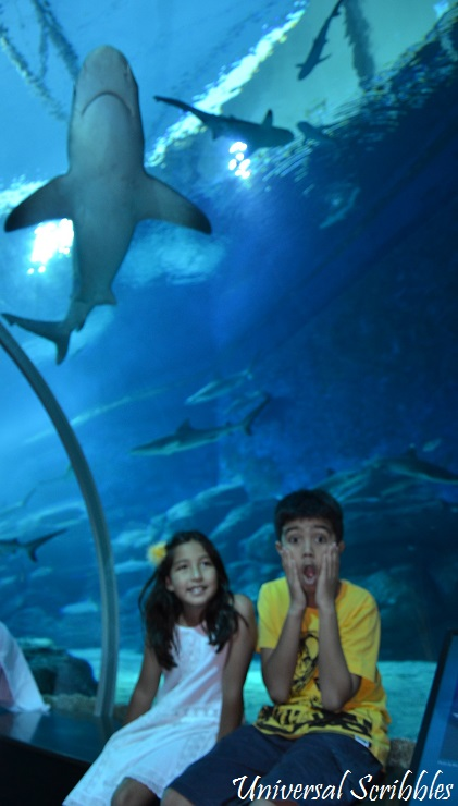 US.Shark tunnel